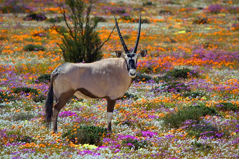 Namaqualand National Park – Namaqualand, South Africa