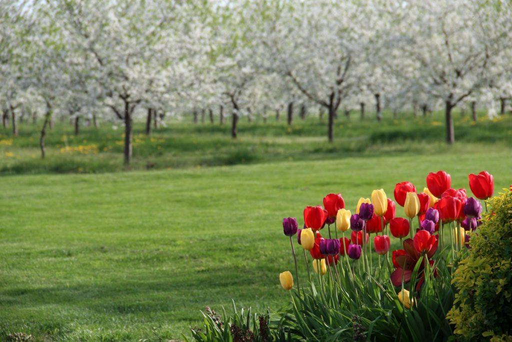 Spring in Spokane, Washington