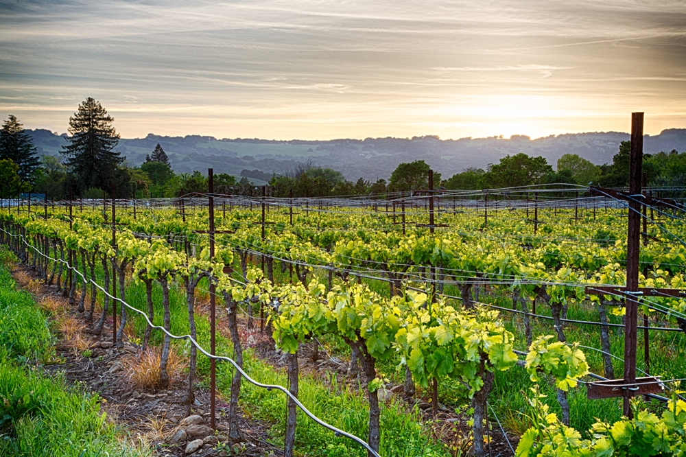 Exploring California's Sonoma Wine Country