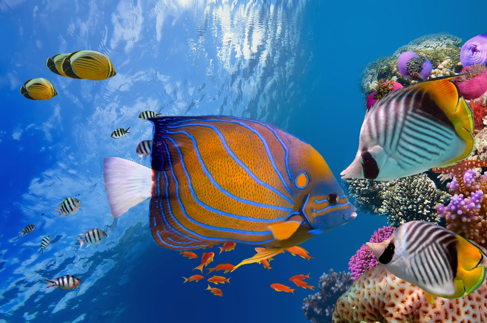 Undersea Gardens – Newport, Oregon